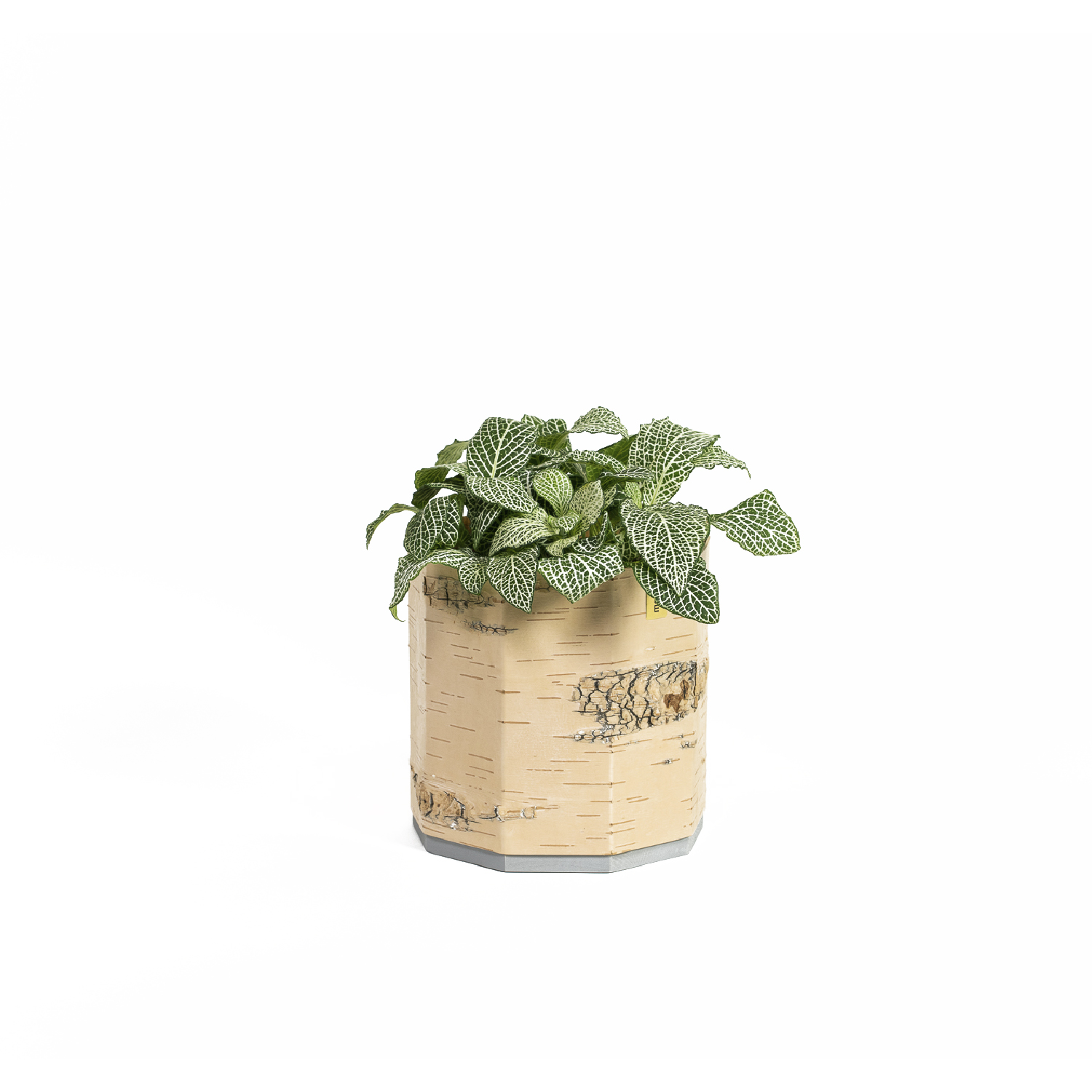 Tara Planter - In our new planter series Tara your green favourites and beauties find a home in a familiar natural environment. The warm, bright surface of birch bark accentuates the rugged foliage of houseplants or the lush green of kitchen herbs to make them shine. These lightweight Planters, made from 100% natural material and make beautiful centrepieces. They can also be arranged wonderfully in rows on a windowsill.  The Planters are available in two sizes and are suitable for many common herbs and pot plants. The integrated glass insert collects excess water.  Height 14 cm | ø 13,5 cm  Suitable for plant pots up to size: Height 11 cm | ø 12,5 cm  Birch bark, glass insert, pine wood (surface: water based wood stain, bees wax) | Matter of Stuff