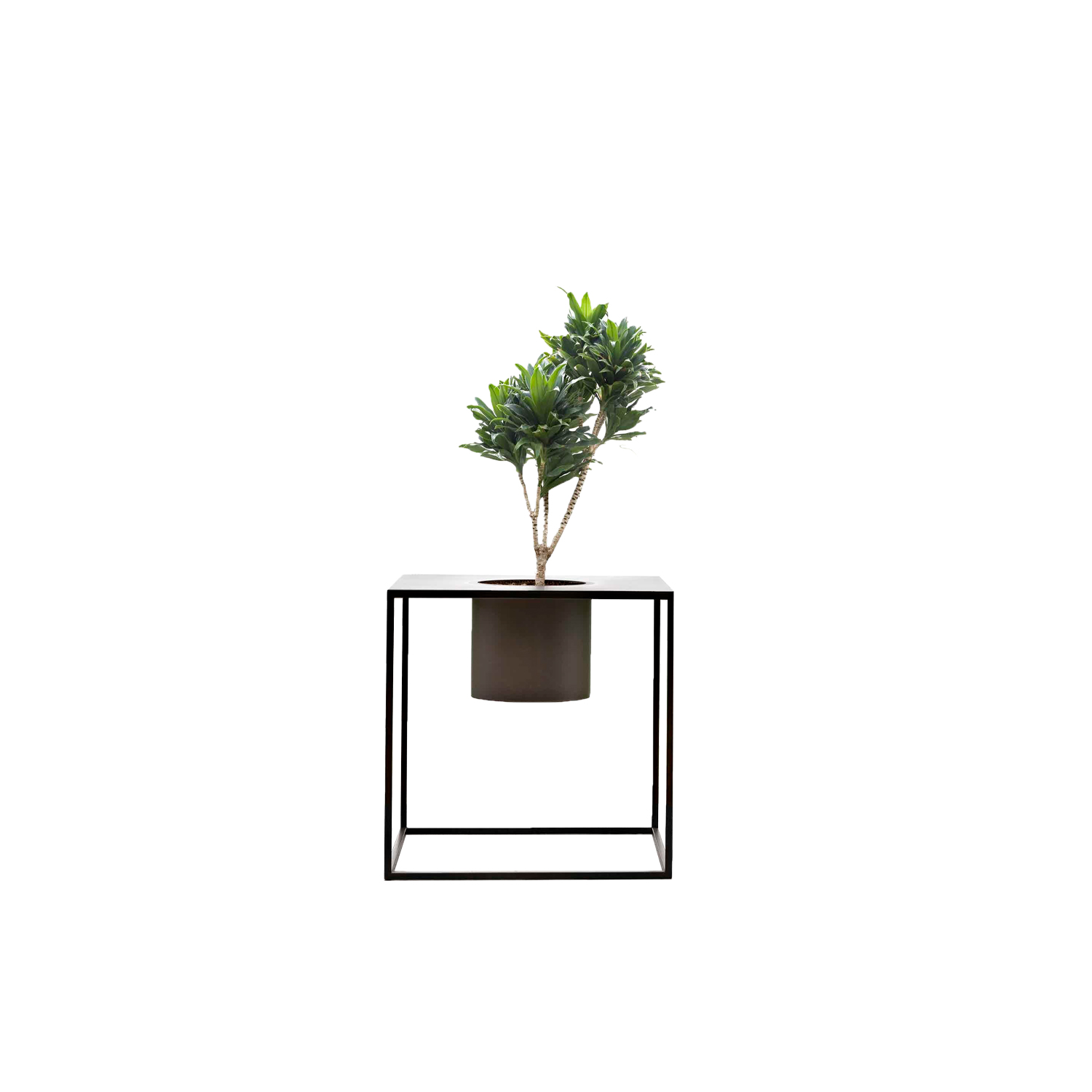 "Riviera Plant Pot - ""I've always been drawn to nature as it manifests its strength in unexpected contexts"".‎ With this, Aldo Cibic built a miniature natural landscape, poetically made of structures, containers and objects to house small gardens, both indoors and outdoors.‎ With a minimal, simple design and a thin, barely-there frame, the lightness of the lines converges to exalt the ezxpressiveness of the metals and the sensory nature of their surfaces.‎